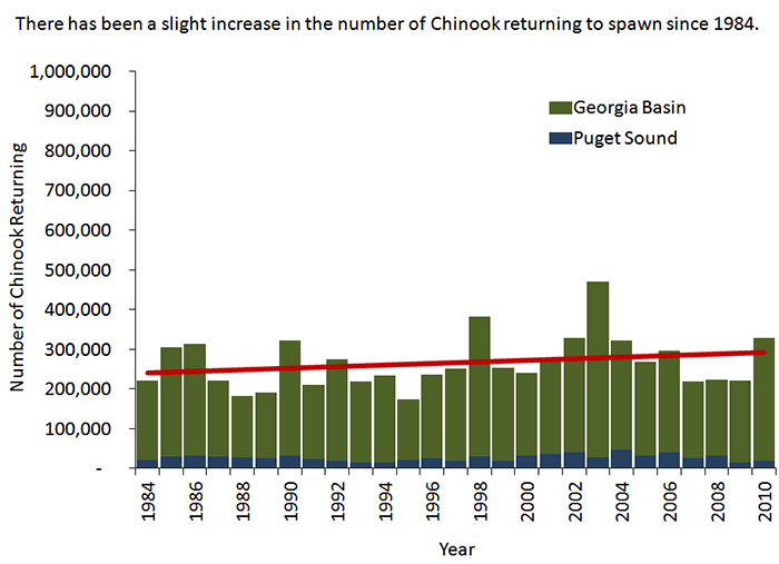 chinook salmon health of the salish sea ecosystem report