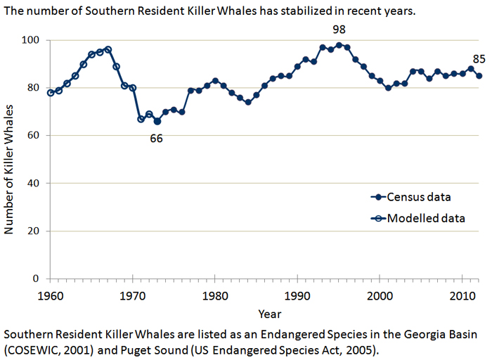 the population decline of the beluga whales and their importance to the ecosystem With their population dropping as low as 85 individuals in 2014, inbreeding depression has probably begun to affect the fitness of the species, potentially contributing to the population's further decline.