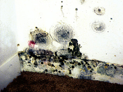 Colorful Mold Growth