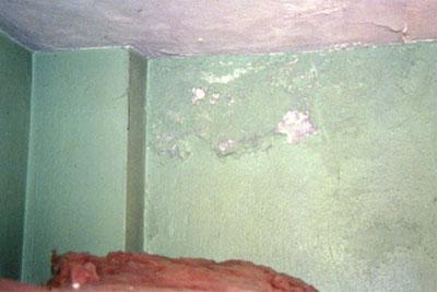 Bedroom Corner growing mold