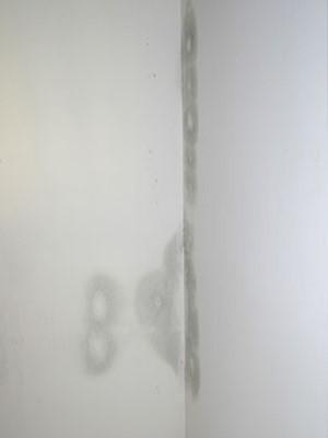 Livingroom Wall growing mold