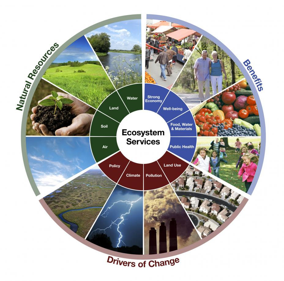 ecological services Tfg defines ecological services as the market benefits arising from the ecological functions of healthy ecosystems in a forest ecosystem, the services with explicit capital value are forest-carbon sequestration (climate benefits), biodiversity, and streamside and wetland mitigation.