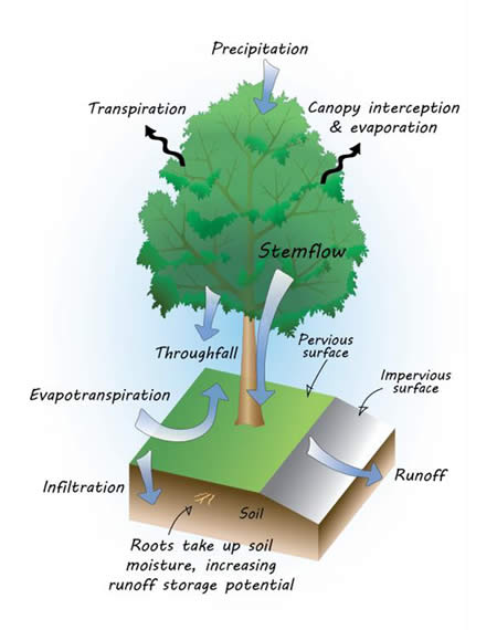 what is the importance of planting trees