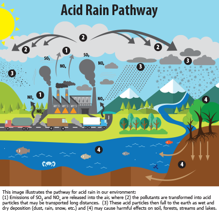 this image illustrates the pathway for acid rain in our environment