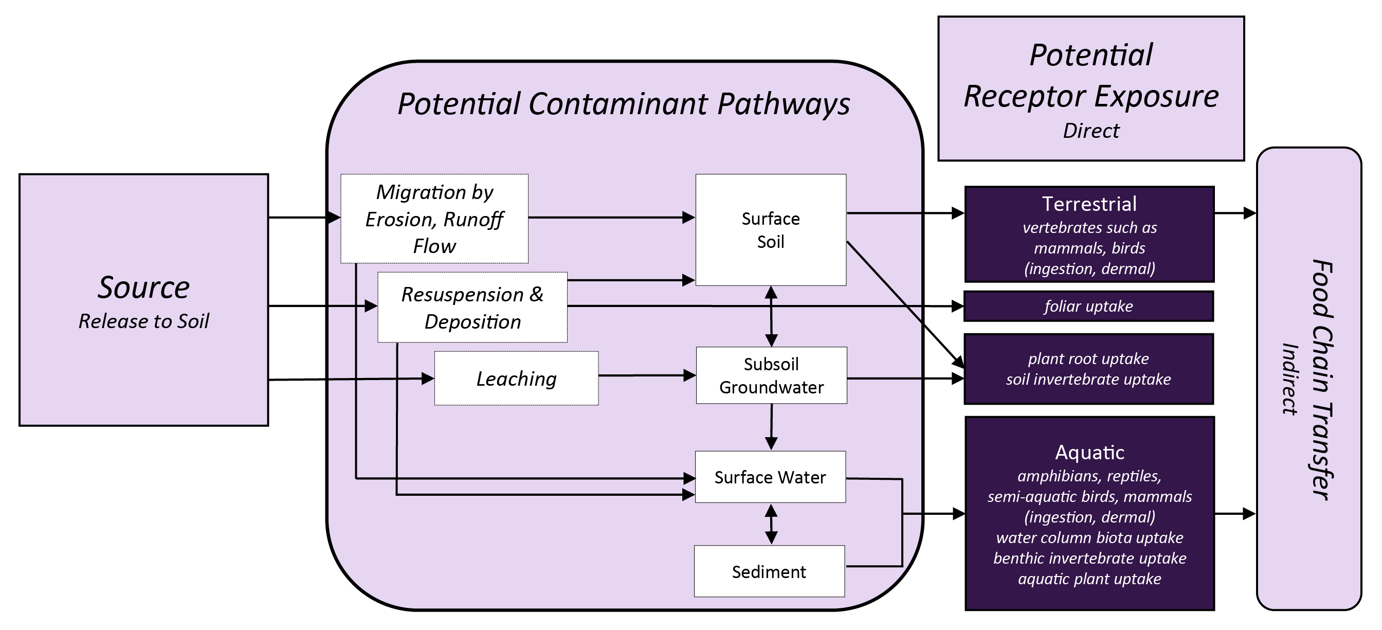 Potential exposure pathways and ecological receptors