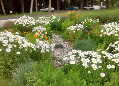 Rain garden at the VA Central Western Massachusetts Healthcare System facility in Leeds, MA (Photo Credit - U.S. Air Force)