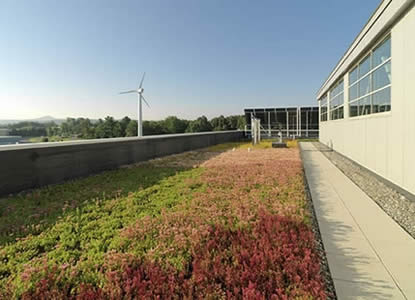 A green roof in Burlington, Vermont (Photo Credit - VT Stormwater Program)