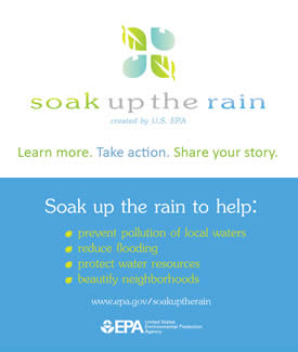 Soak Up the Rain Business Cards (Front & Back)