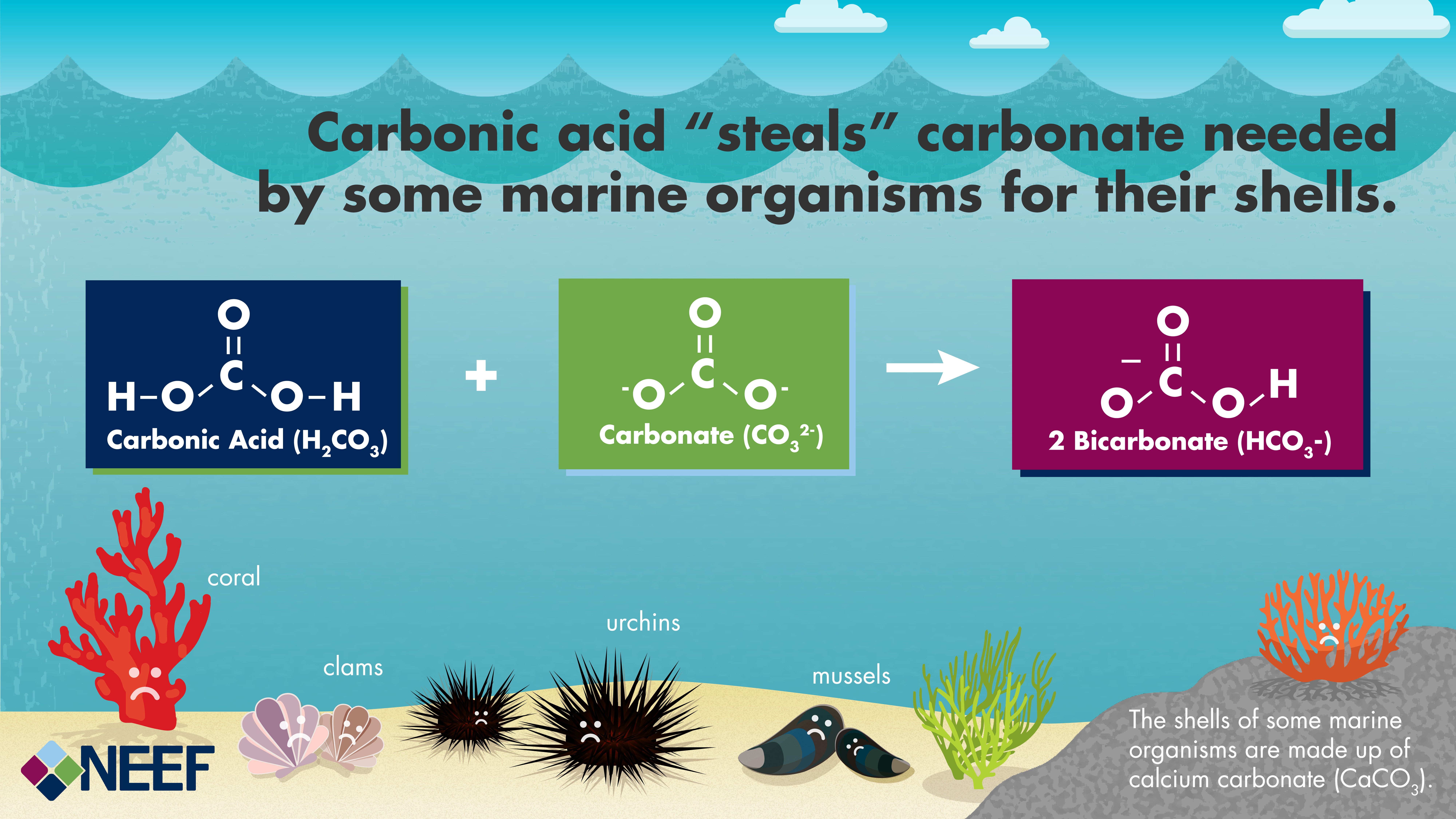 Understanding the science of ocean and coastal acidification simple conceptual diagram showing how carbonic acid reacts with carbonate to form bicarbonate effectively making pooptronica