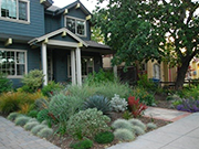 Image of a home with water saving plants.