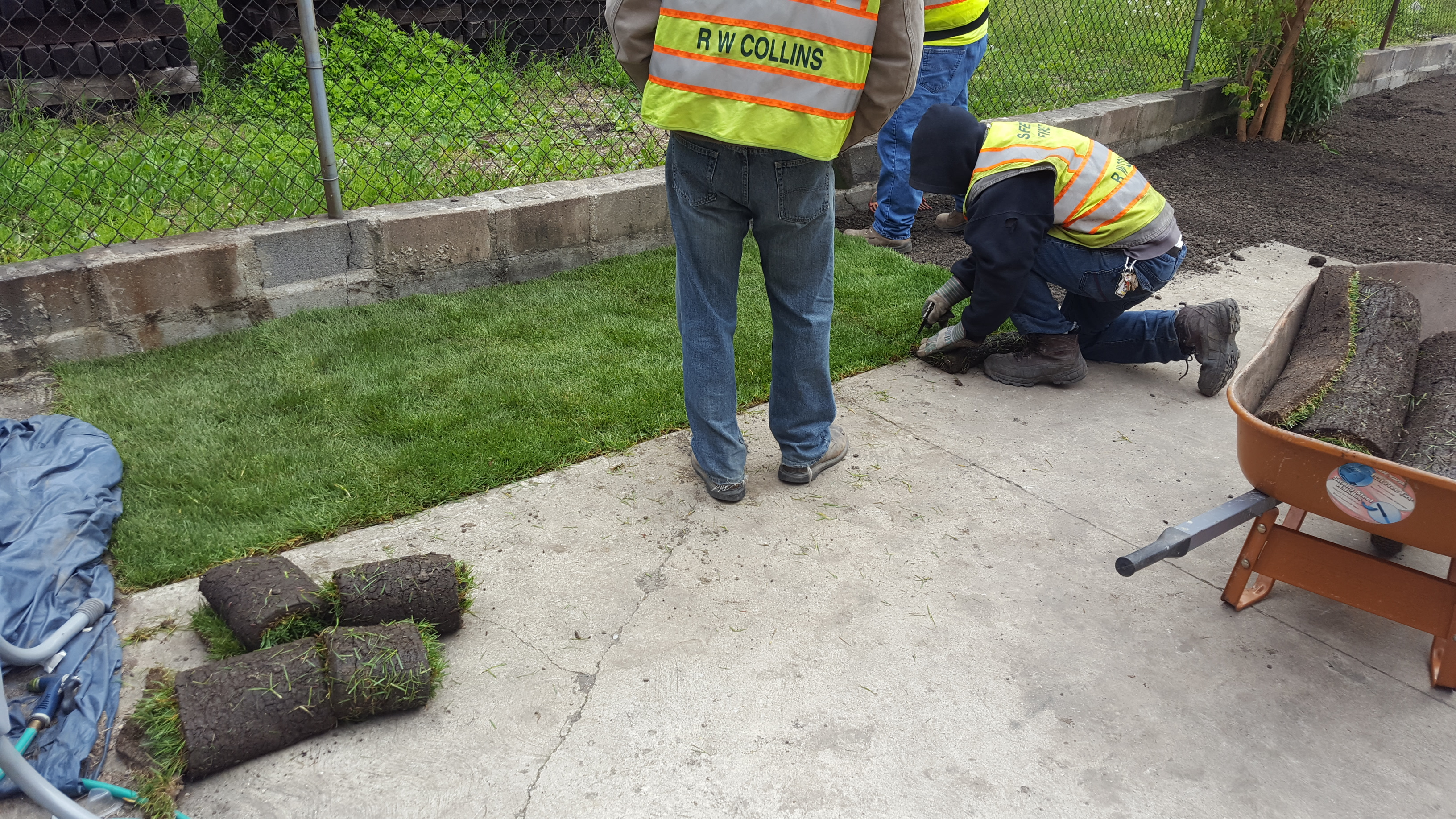 Sod Laid Down On Lawn After Removal And Replacement Of Lead Contaminated Soil