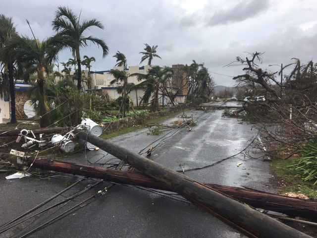photo of a street with downed utilities poles and thick, damaged vegetation