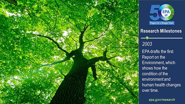 2003-EPA drafts the first Report on the Environment, which shows how the condition of the environment and human health changes over time. View of a tree and its leaves from below.