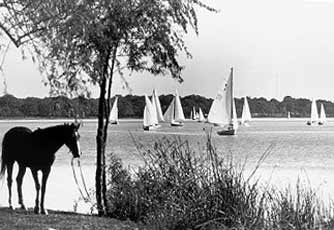 Black and white photograph of sailboats and a horse.