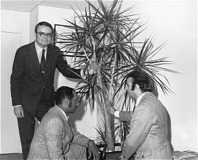 Black and white photo of William D. Ruckelshaus and two businessmen installing a plant in an office.