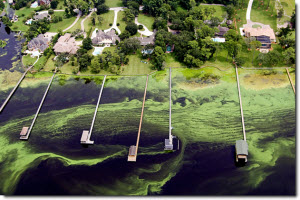 Aerial view of residential docks on a lake polluted from algal blooms