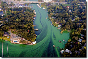 Aerial view of algal polluted river