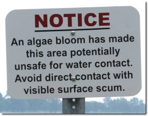 Notice - An algae bloom has made this area potentially unsafe for water contact. Avoid direct contact with visible surface scum.