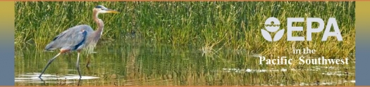 Blue Heron in a wetland