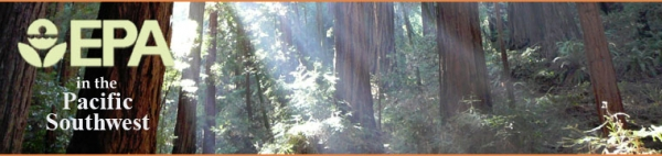 Light shinging through redwood trees