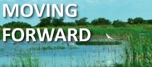 Moving Forward Restored Wetland Iowa Image