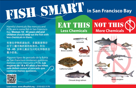 Fish Smart San Francisco Bay: Harmful chemicals like mercury and PCBs are in some fish in San Francisco Bay.