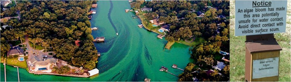 Photos of harmful algal toxins
