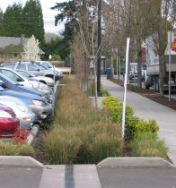 Photo of parking lot planted with grasses, shrubs and trees