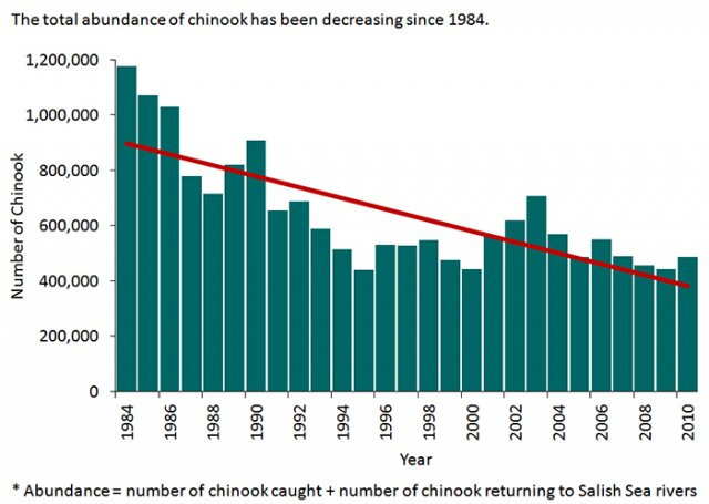Chart showing the decreasing trend in the number of Chinook salmon in the Salish Sea since 1984.