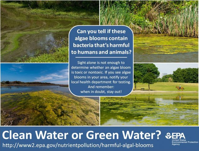 Clean Water or Green Water postcard