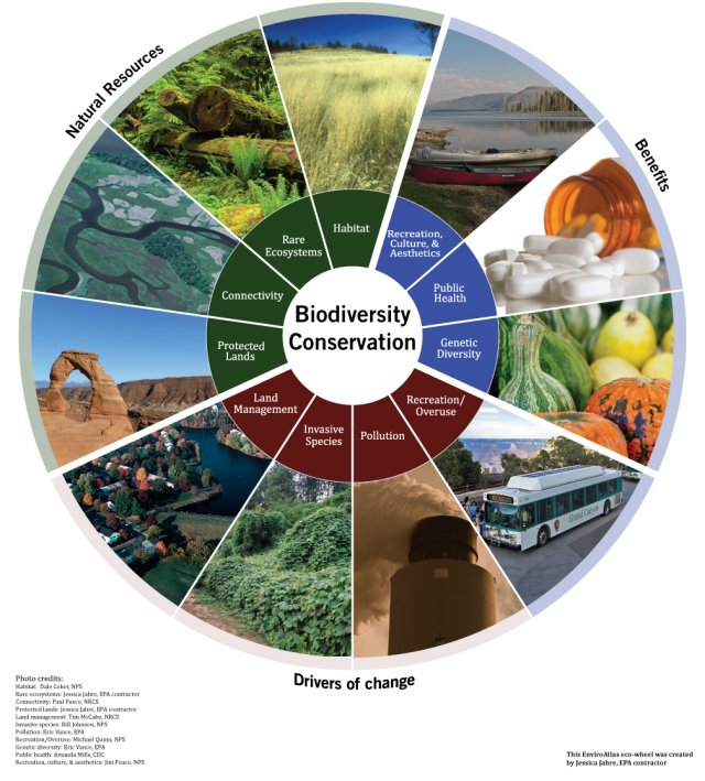 Eco-Wheel for Biodiversity Conservation benefit category. Sections are natural resources, benefits, and drivers of change.