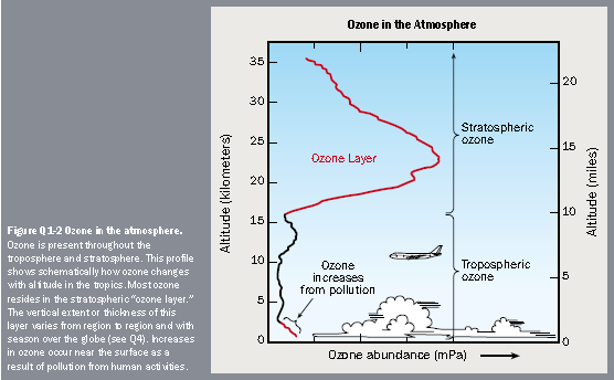 This profile shows schematically how ozone changes with altitude in the tropics.