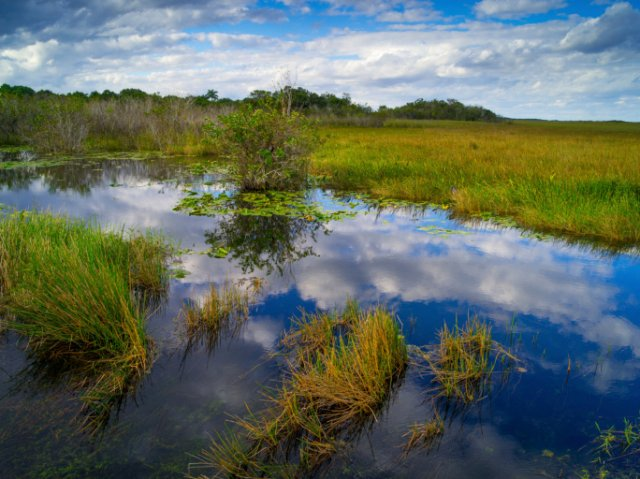 Southwest Florida Salt Marsh