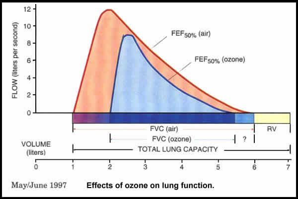 Effects of ozone on lung function
