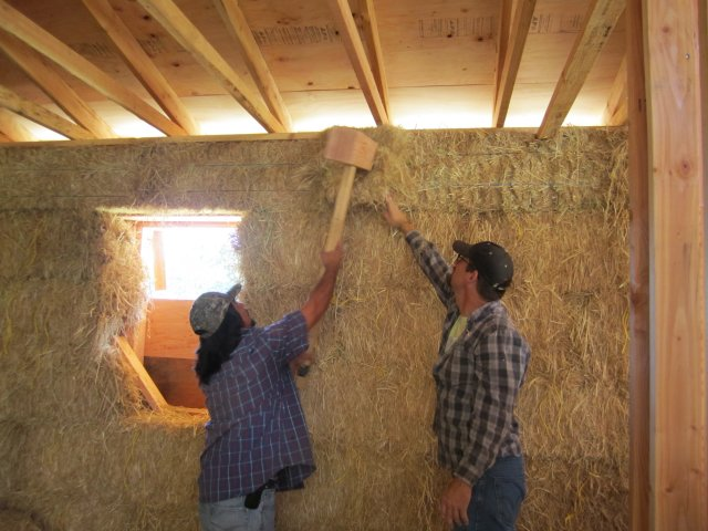 Workers in wood framed building interior with straw bale covered wall use a large wooden mallet to force additional hay into the last open space on the wall.