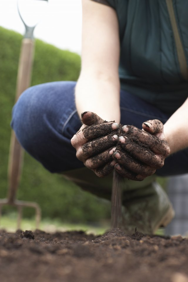 Photo depicting healthy soil
