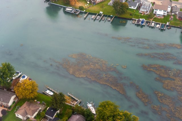 Aerial photo of excessive algal growth