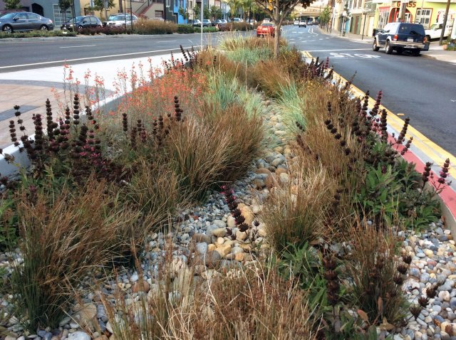 Grasses and other plants planted among stones instead of bare soil in a median strip with traffic on both sides.