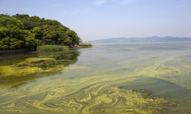 Cyanobacteria in lake