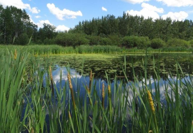 Image depicting wetland with grasses and water