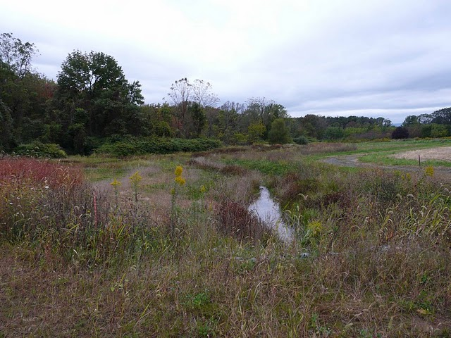 The restored wetland habitat on the site