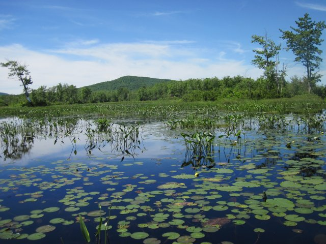 This is an image of a wetland by a brownfield.