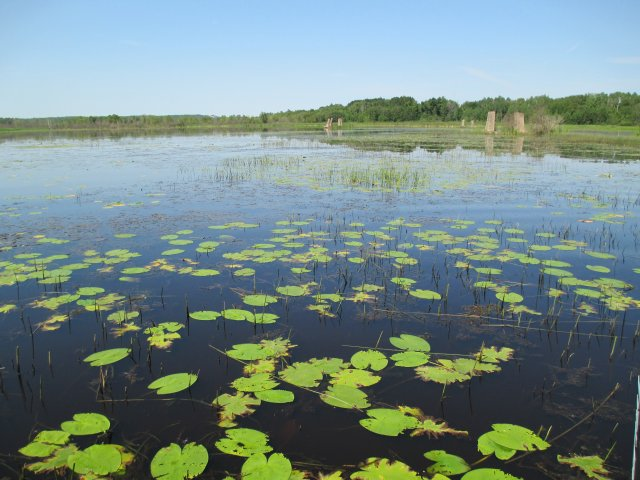 Recently restored Great Lakes coastal wetland within the St. Louis River estuary