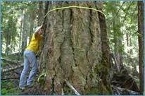 Tree mortality survey conducted every 5-10 years to track changes in forest health and condition.