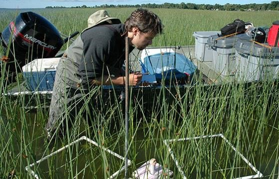 Great Lakes Coastal Wetland Monitoring Program scientists sample for macroinvertebrates.