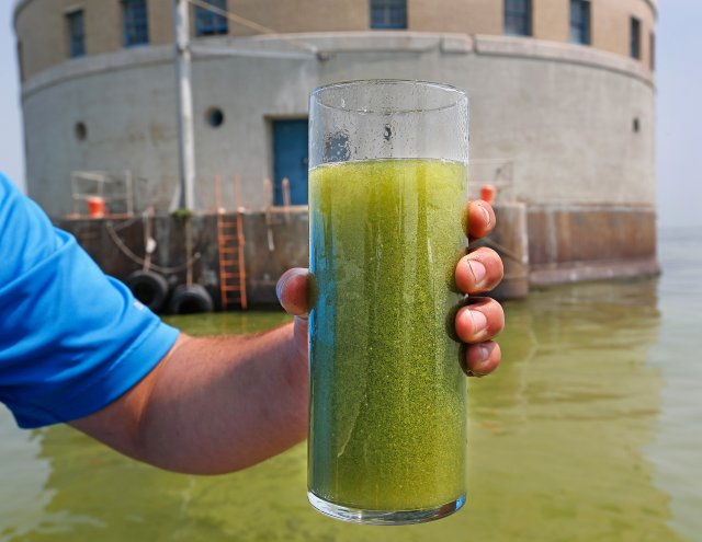 Cyanobacterial bloom at drinking water intake in Lake Erie