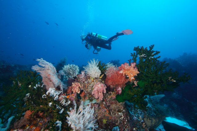 EPA diver swimming over a coral reef outcrop showing stony corals and soft corals (sea fans).