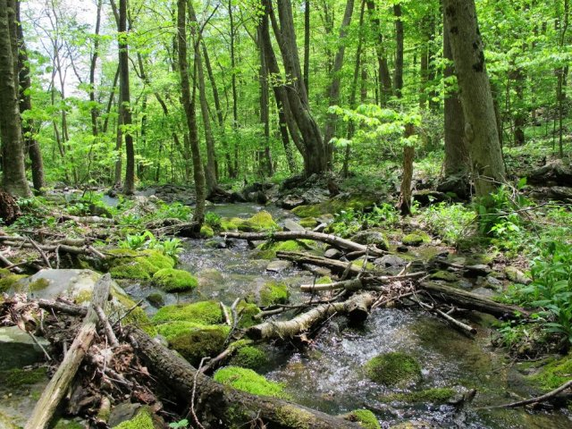 stream in shenandoah forest