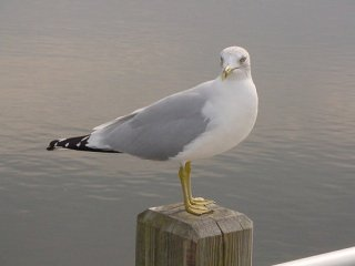 Photo of seagull on a pier piling