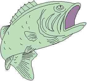Image of fish